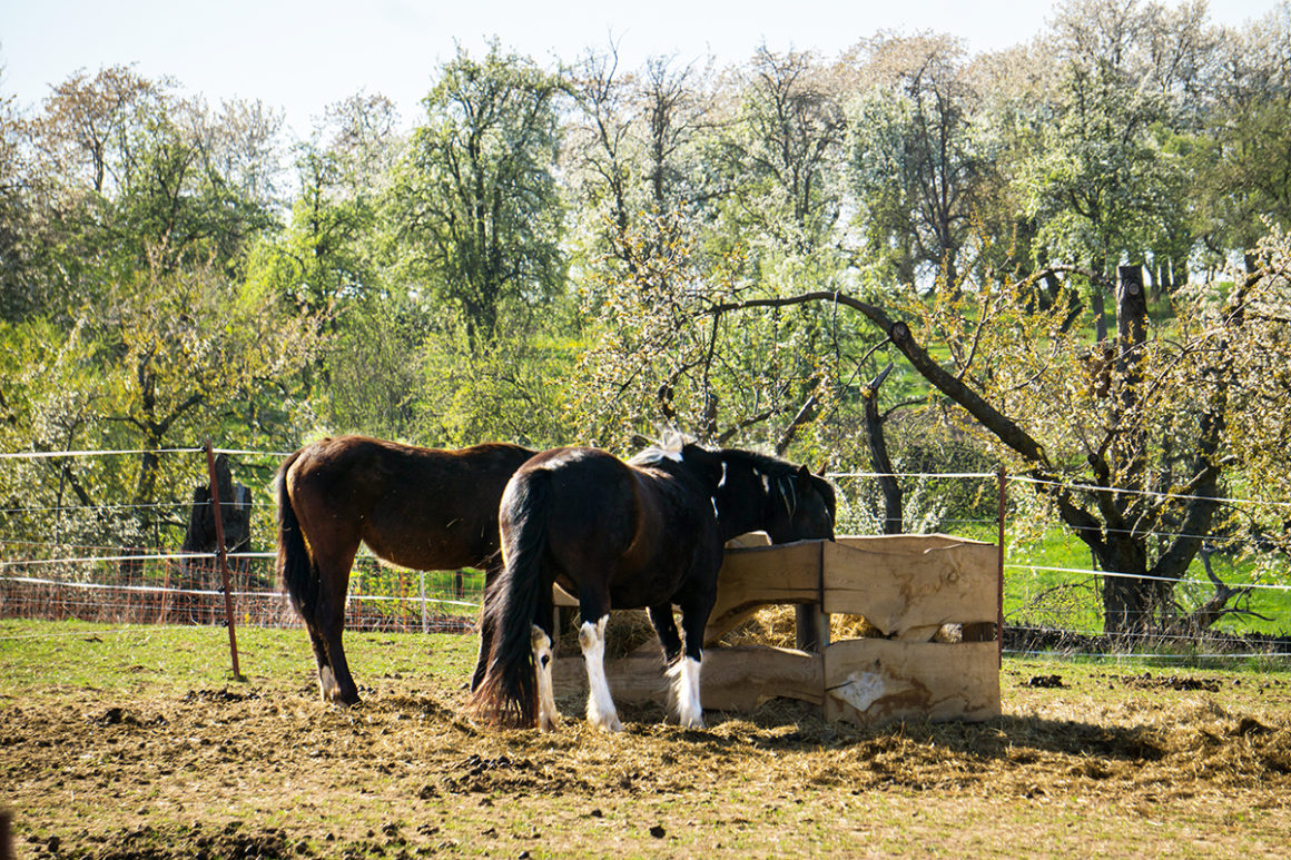 Pferdepension: 2 freie Einstellplätze
