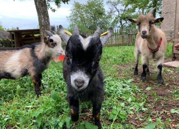 3 neue Bewohner auf dem Kastanienhof
